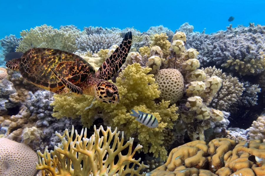 Coral reefs provide many benefits to both marine animals and people, but they are disappearing quickly.